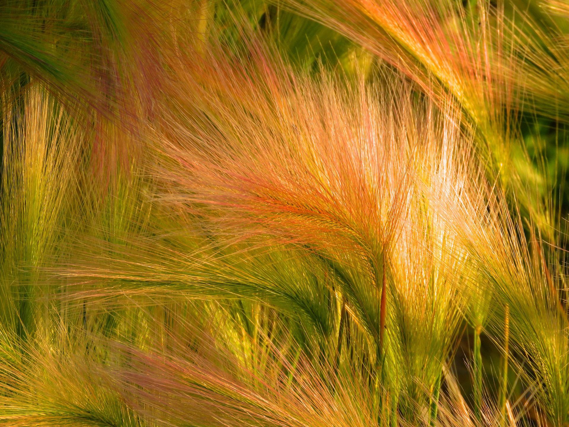 Jakie trawy ozdobne wybrać do ogrodu?