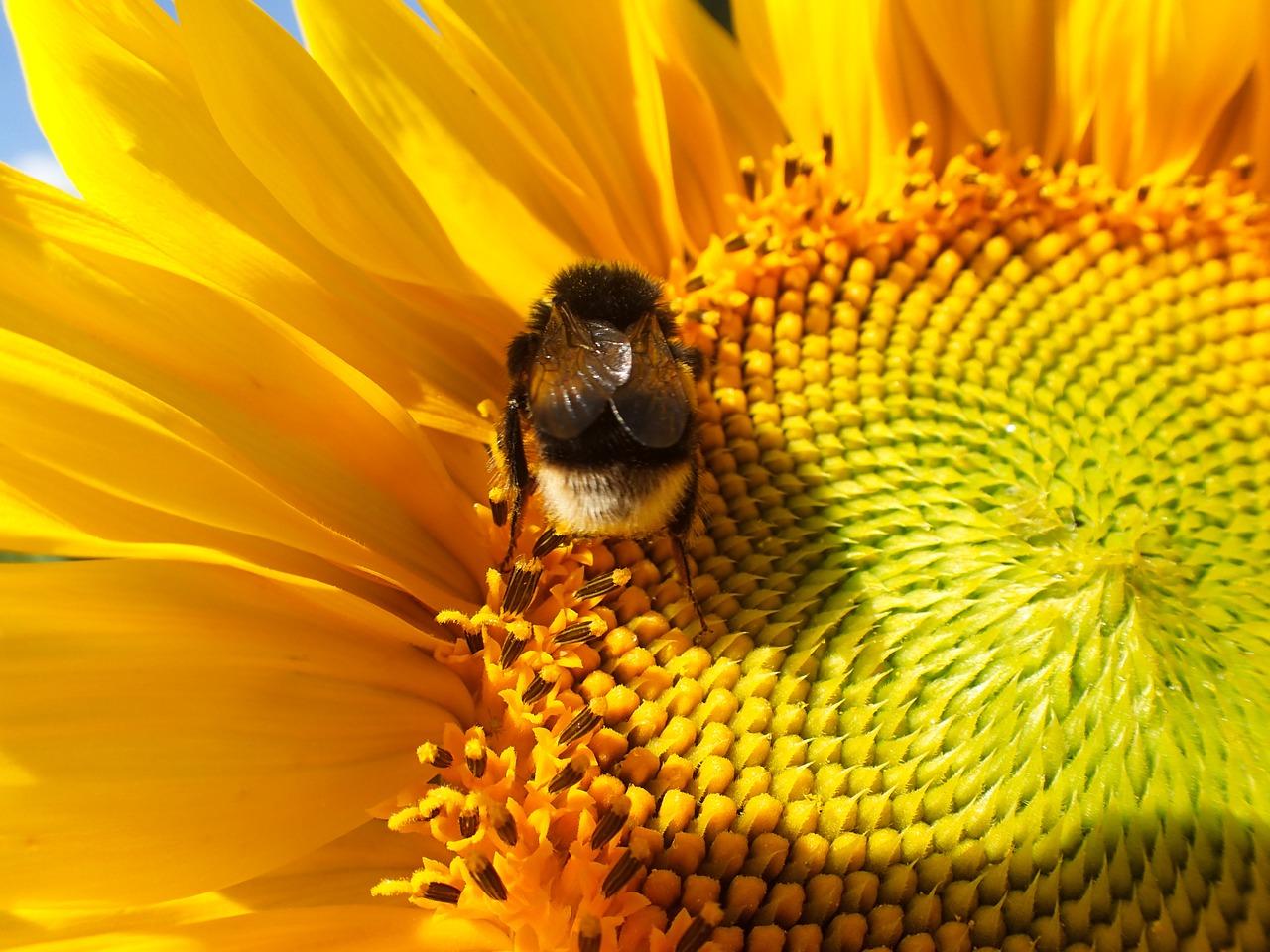 Jak pomagać pszczołom?